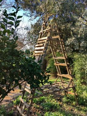 Jacob's ladder 2